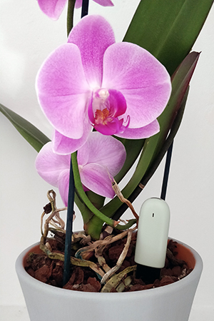 Orchid with Mi Flora